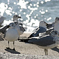 Seagulls In The Cold Sun by Christopher Purcell