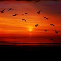 Seagulls In The Morning by Mattie Bryant