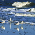 Seagulls In The Tide by Angela Rath