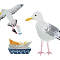 Seagulls by Isobel Barber