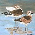 Seagulls by Linda Speaker