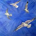 Seagulls by Olga Kaczmar