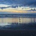 Seagulls On Beach At Sunset by Mel Manning