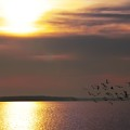 Seagulls On The Chesapeake by Bill Cannon