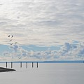Seagulls Over Admiralty Inlet 2 by Katy Granger