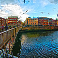 Seagulls Over Liffey by Alex Art and Photo