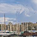 Seagulls Over Mylor Creek Boatyard by Terri Waters