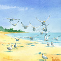Seagulls by Ray Cole