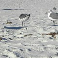 Seagulls by Shannon Turek