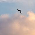 Seagull's Sky 3 by Jouko Lehto