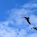 Seagulls2 by Sergei Dratchev
