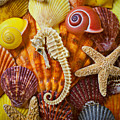 Seahorse And Assorted Sea Shells by Garry Gay