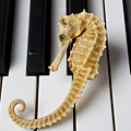 Seahorse On Keys by Garry Gay