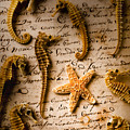 Seahorses And Starfish On Old Letter by Garry Gay