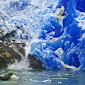 Seal And Glacier by Harry Spitz
