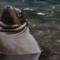 Seal In The Water by Harry Coburn