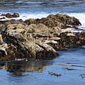 Seal Island by Carol Groenen