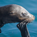 Seal by Ralf Kaiser