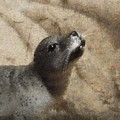 Seal With A Kiss by Shannon Story