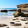 Seals Siesta On La Jolla Beach by Hao Aiken