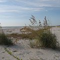 Seaoats On The Beach by Christiane Schulze Art And Photography