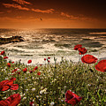 Seascape With Poppies by Dan Cristian Mihailescu