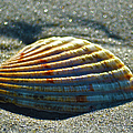Seashell After The Wave by Sandi OReilly