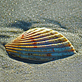 Seashell After The Wave Square by Sandi OReilly
