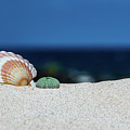 Seashell by Alexander Petrov