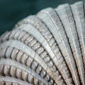 Seashell Designs by Angela Murdock
