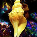 Seashell by Frank Wilson