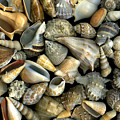 Seashell Medley by Christian Slanec
