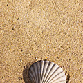 Seashell by Jorgo Photography - Wall Art Gallery