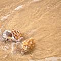 Seashell Turbulence by Kaye Menner
