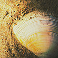 Seashells And Beach Colours by Jorgo Photography - Wall Art Gallery
