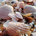 Seashells And Pebbles by Robert Banach