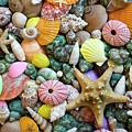 Seashells 3 by Bob Christopher