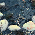 Seashells By The Water by Colleen Kammerer