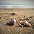 Seashells In The Sand by Stephanie Russell