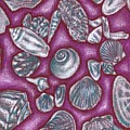 Seashells by Jennifer Bonset
