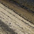 Seashells On A Beach by Todd Gipstein