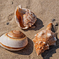 Seashells On The Sand by Mary Papadopoulou