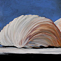 Seashells by Toni Grote