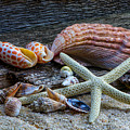 Seashells And Driftwood by Randy Walton