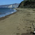 Seashore And Driftwood by Don Kreuter