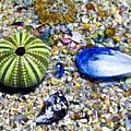 Seashore Colors by Douglas Barnett