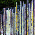 Seashore Fence by Garry Gay