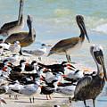 Seashore Gathering by Marilee Noland