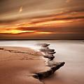 Seashore Wonders by Jorge Maia