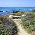 Seaside Bench by Carol Groenen